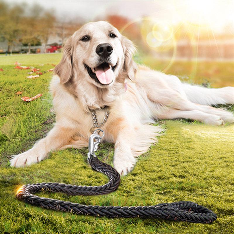 miten kouluttaa kultainennoutaja koiria, miten kouluttaa golden retri